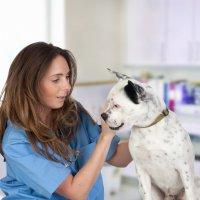 Veterinary Office Assistant